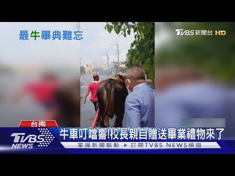 image of 難忘畢典!校長駕牛車送禮物 老師外送證書|TVBS新聞